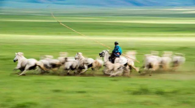 西乌珠穆沁——中国白马之乡 第12张