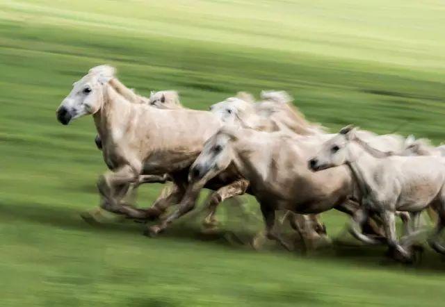 西乌珠穆沁——中国白马之乡 第15张