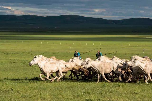 西乌珠穆沁——中国白马之乡 第14张