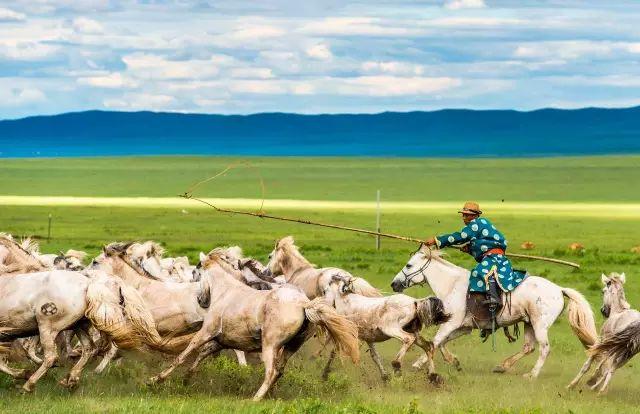 西乌珠穆沁——中国白马之乡 第13张