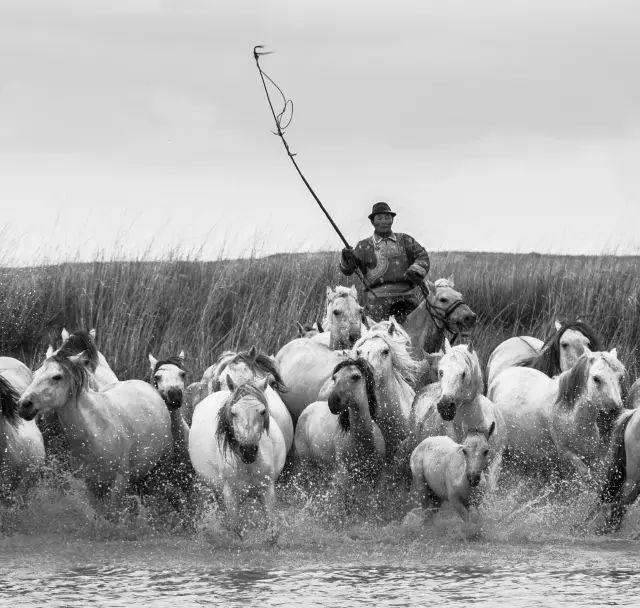 西乌珠穆沁——中国白马之乡 第19张