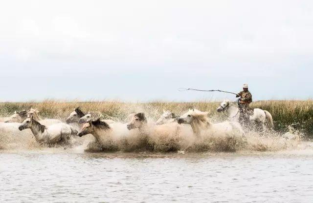 西乌珠穆沁——中国白马之乡 第18张