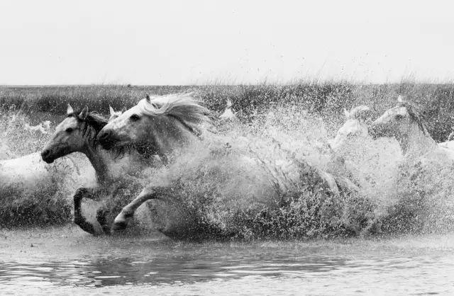 西乌珠穆沁——中国白马之乡 第22张