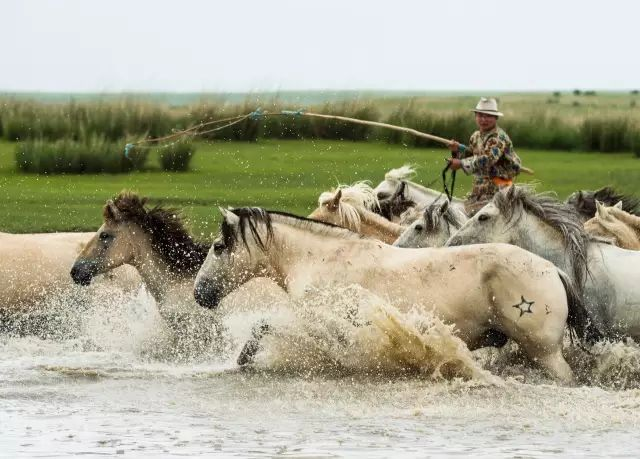 西乌珠穆沁——中国白马之乡 第20张