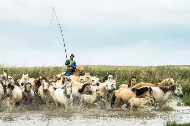 西乌珠穆沁——中国白马之乡 第21张