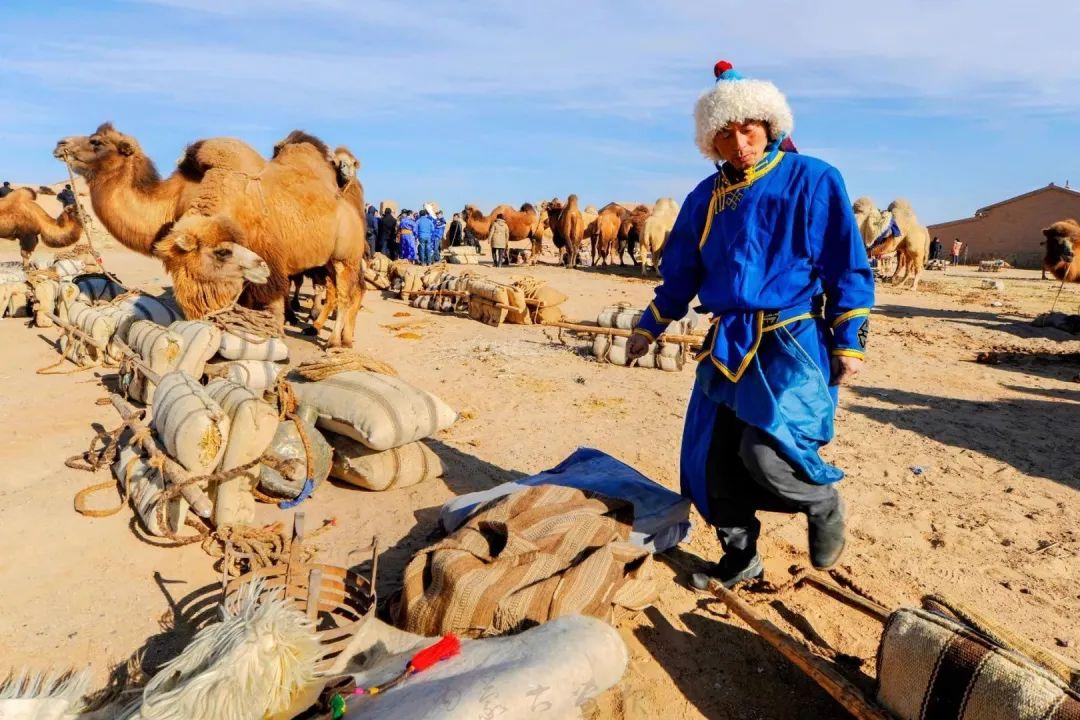 追光录影20载 沙海边陲护驼人 第12张