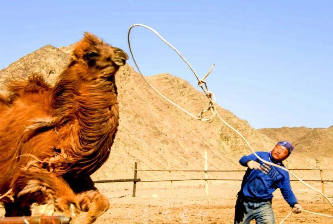 追光录影20载 沙海边陲护驼人 第20张