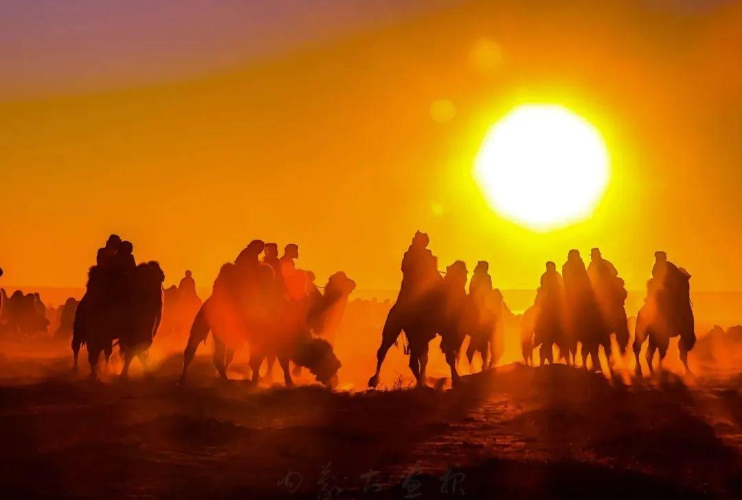 追光录影20载 沙海边陲护驼人 第26张