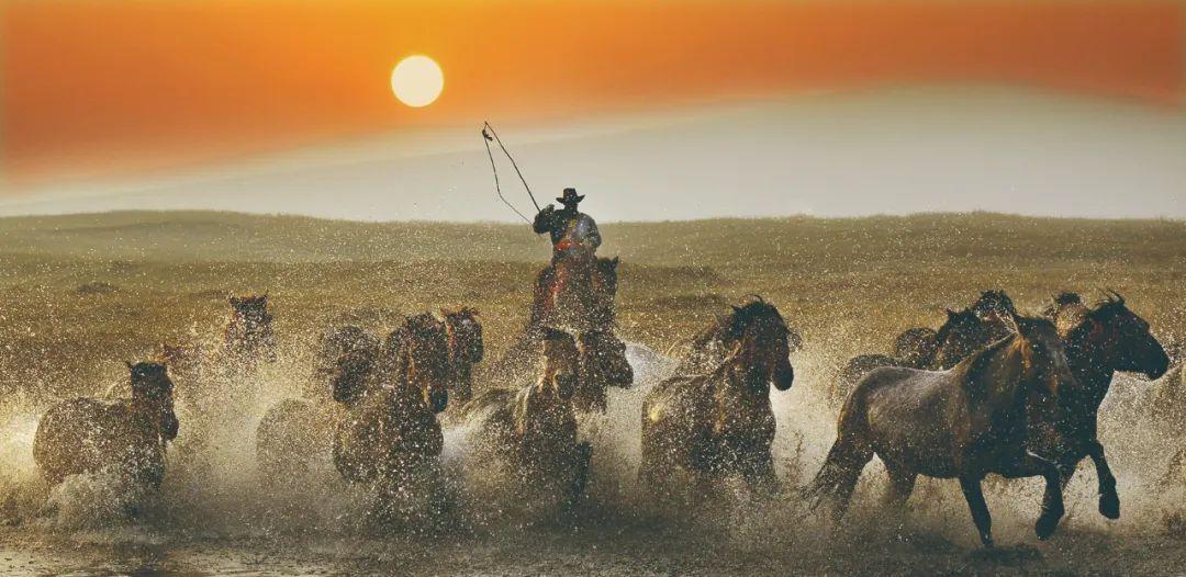 蒙古马神采 第1张