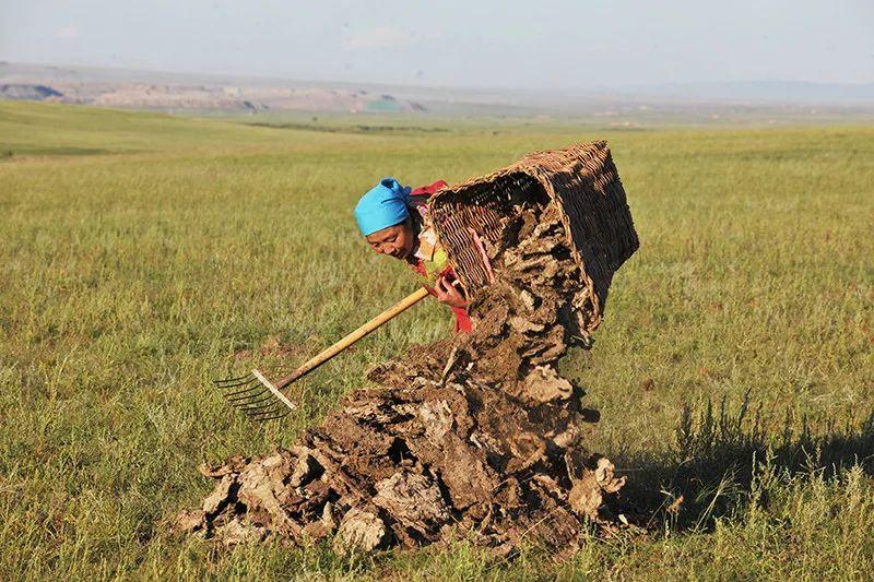 蒙古族牛粪文化 第3张
