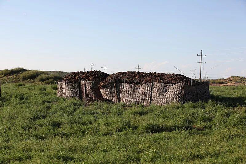 蒙古族牛粪文化 第10张