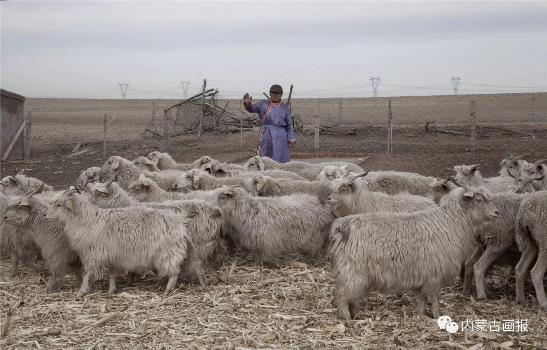 牧民的小年 第5张 牧民的小年 蒙古文化