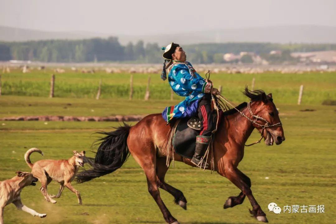 蒙古人忠实的伙伴——狗 第12张 蒙古人忠实的伙伴——狗 蒙古文化