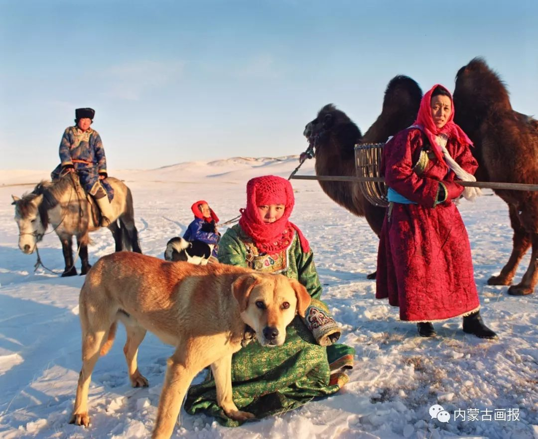 蒙古人忠实的伙伴——狗 第11张 蒙古人忠实的伙伴——狗 蒙古文化