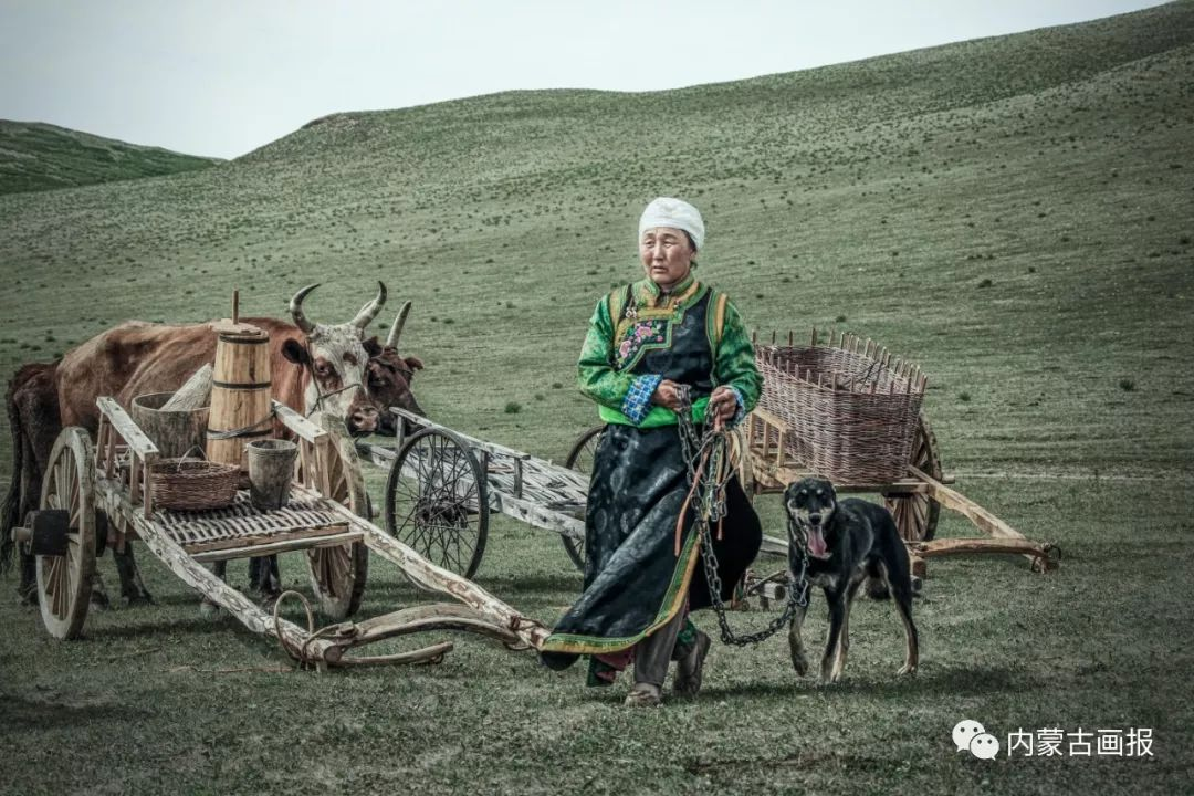 蒙古人忠实的伙伴——狗 第13张 蒙古人忠实的伙伴——狗 蒙古文化