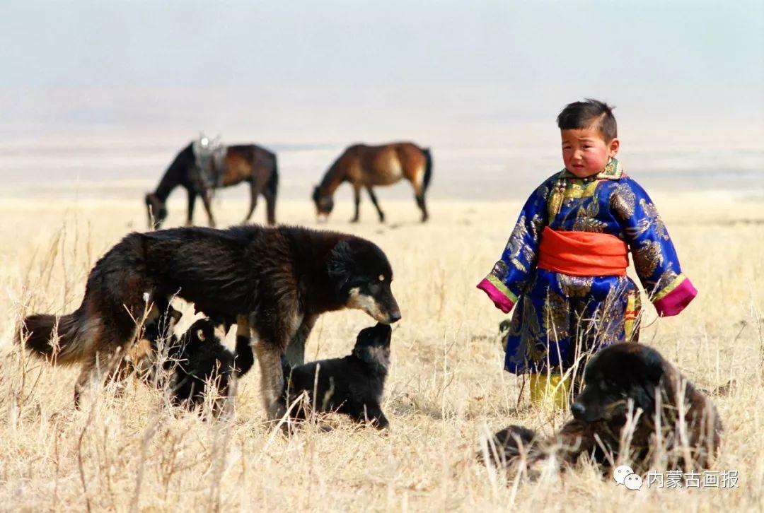 蒙古人忠实的伙伴——狗 第15张 蒙古人忠实的伙伴——狗 蒙古文化