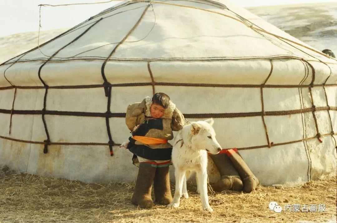 蒙古人忠实的伙伴——狗 第14张 蒙古人忠实的伙伴——狗 蒙古文化