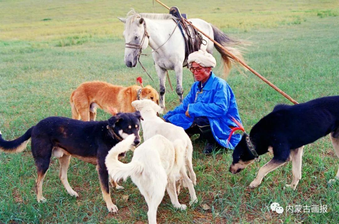 蒙古人忠实的伙伴——狗 第17张 蒙古人忠实的伙伴——狗 蒙古文化