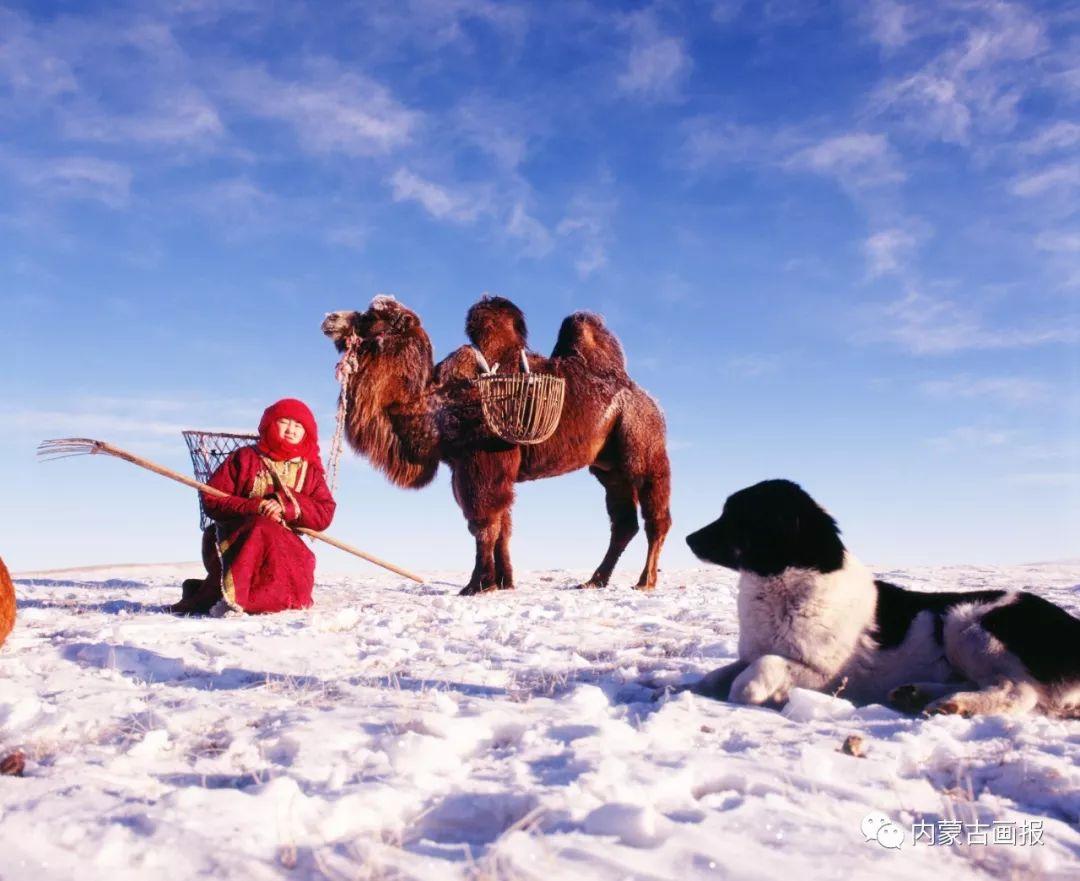 蒙古人忠实的伙伴——狗 第16张 蒙古人忠实的伙伴——狗 蒙古文化