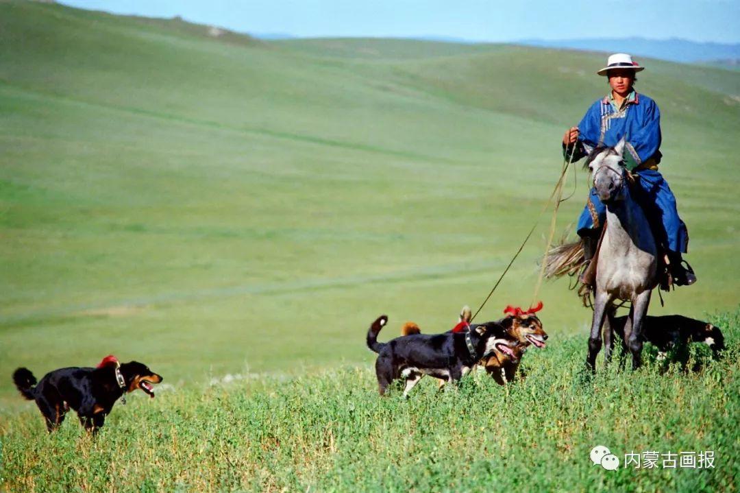 蒙古人忠实的伙伴——狗 第18张 蒙古人忠实的伙伴——狗 蒙古文化