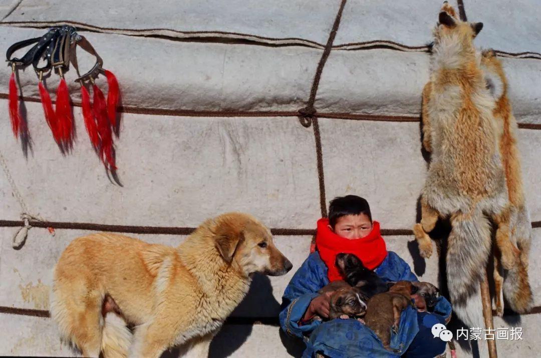 蒙古人忠实的伙伴——狗 第19张 蒙古人忠实的伙伴——狗 蒙古文化