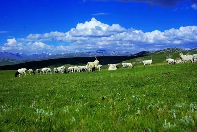 新疆巴音郭楞蒙古自治州和静县巴音布鲁克草原美景 第22张 新疆巴音郭楞蒙古自治州和静县巴音布鲁克草原美景 蒙古文化
