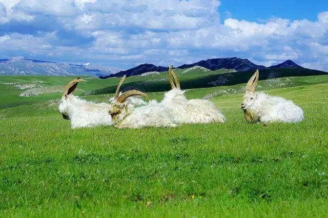 新疆巴音郭楞蒙古自治州和静县巴音布鲁克草原美景 第24张 新疆巴音郭楞蒙古自治州和静县巴音布鲁克草原美景 蒙古文化