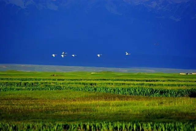 新疆巴音郭楞蒙古自治州和静县巴音布鲁克草原美景 第26张 新疆巴音郭楞蒙古自治州和静县巴音布鲁克草原美景 蒙古文化
