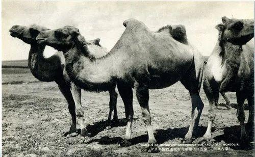 蒙古风俗(民国日本明信片) 第13张 蒙古风俗(民国日本明信片) 蒙古文化
