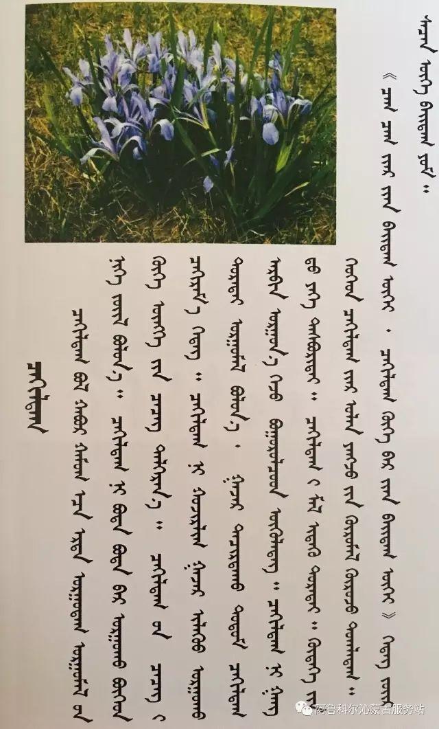 100 多种草的蒙古文介绍 第1张 100 多种草的蒙古文介绍 蒙古文库