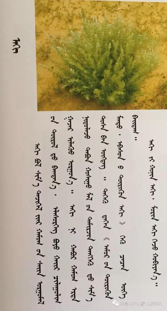 100 多种草的蒙古文介绍 第5张 100 多种草的蒙古文介绍 蒙古文库