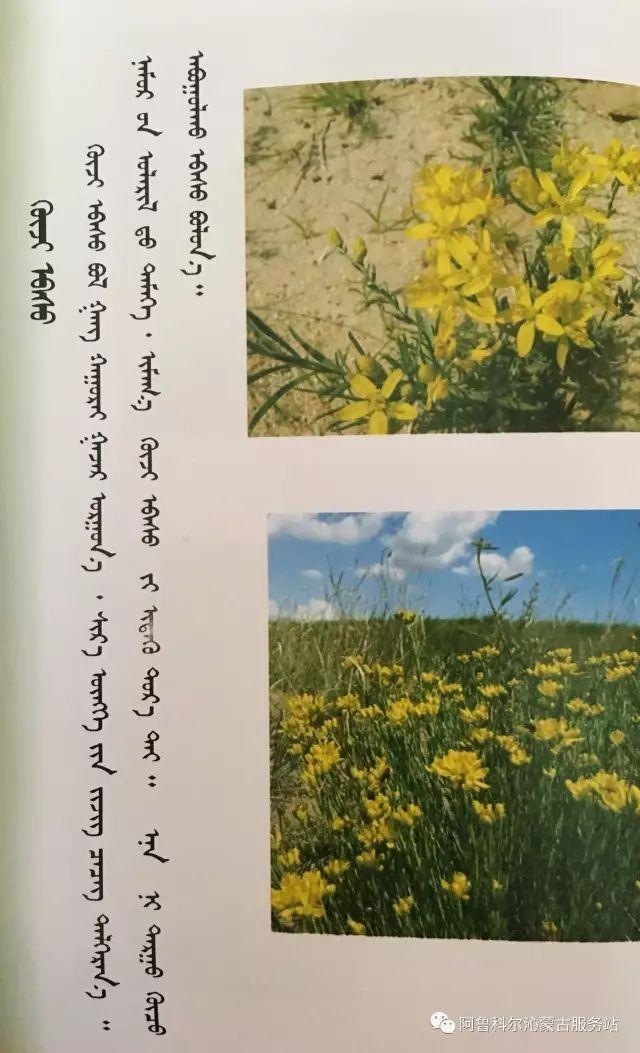 100 多种草的蒙古文介绍 第8张 100 多种草的蒙古文介绍 蒙古文库