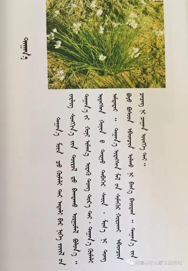 100 多种草的蒙古文介绍 第13张 100 多种草的蒙古文介绍 蒙古文库
