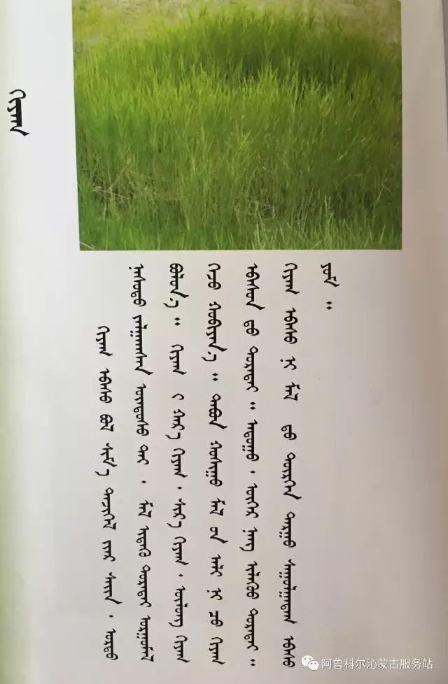 100 多种草的蒙古文介绍 第18张 100 多种草的蒙古文介绍 蒙古文库
