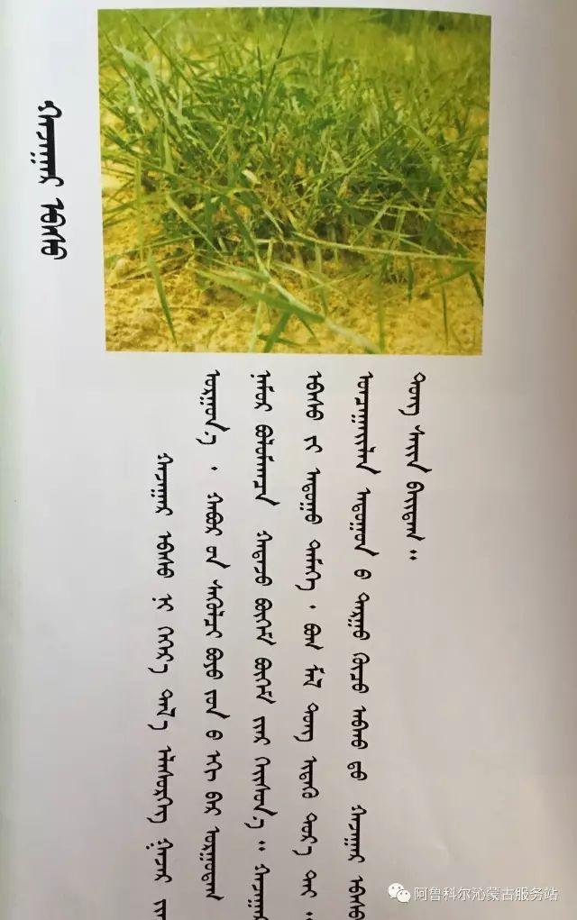 100 多种草的蒙古文介绍 第22张 100 多种草的蒙古文介绍 蒙古文库
