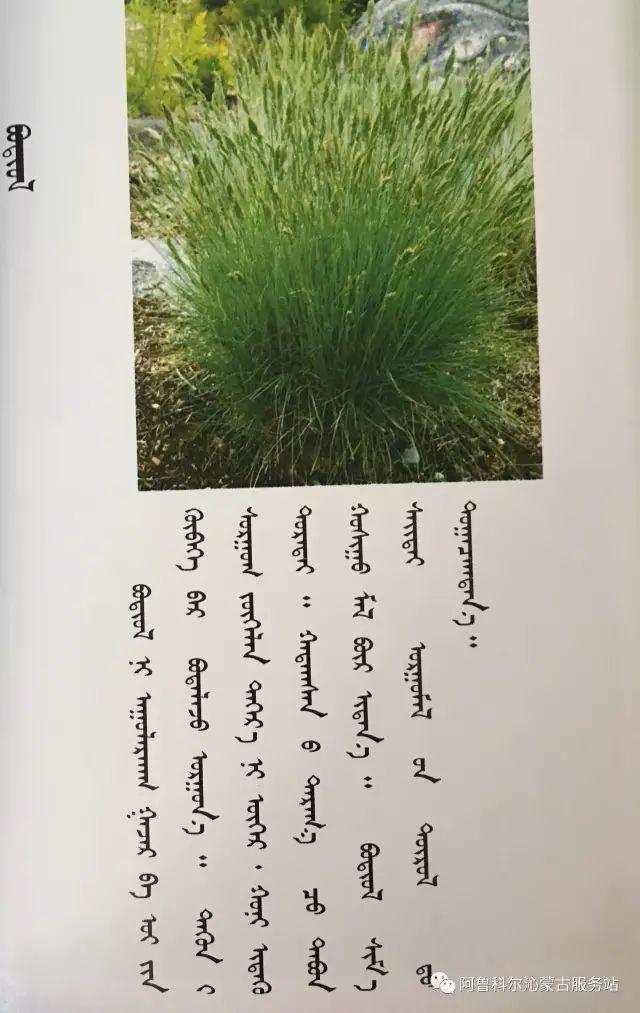 100 多种草的蒙古文介绍 第23张 100 多种草的蒙古文介绍 蒙古文库