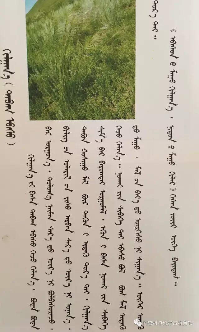 100 多种草的蒙古文介绍 第26张 100 多种草的蒙古文介绍 蒙古文库