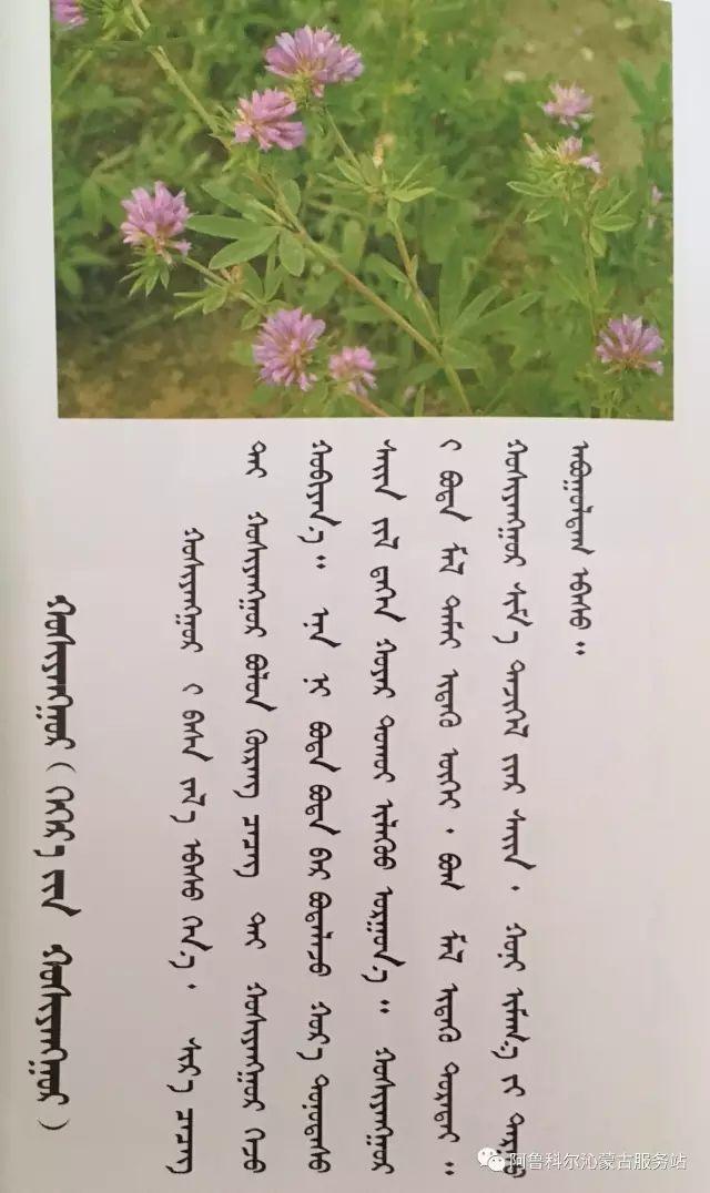 100 多种草的蒙古文介绍 第30张 100 多种草的蒙古文介绍 蒙古文库