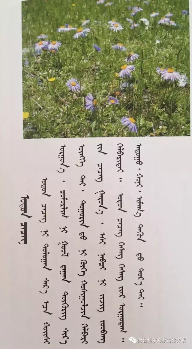 100 多种草的蒙古文介绍 第33张 100 多种草的蒙古文介绍 蒙古文库