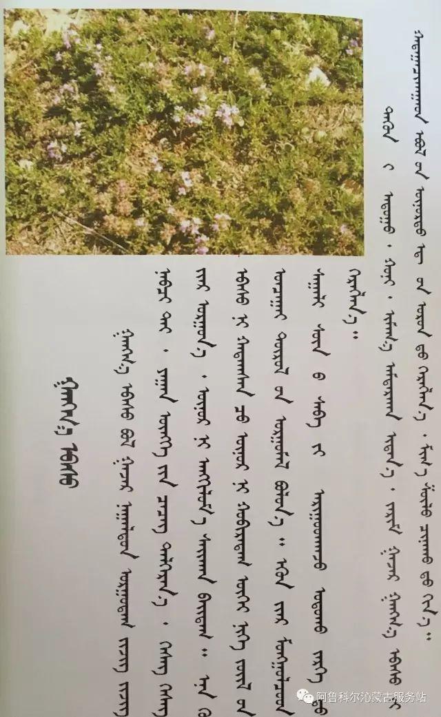 100 多种草的蒙古文介绍 第34张 100 多种草的蒙古文介绍 蒙古文库