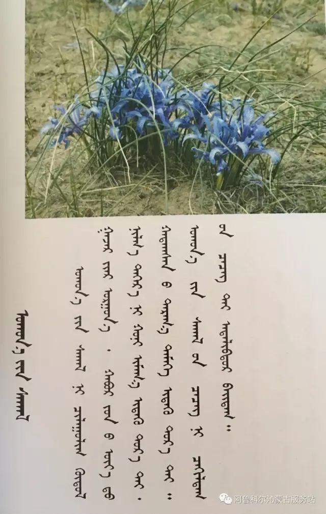 100 多种草的蒙古文介绍 第39张 100 多种草的蒙古文介绍 蒙古文库