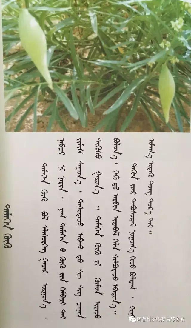 100 多种草的蒙古文介绍 第36张 100 多种草的蒙古文介绍 蒙古文库