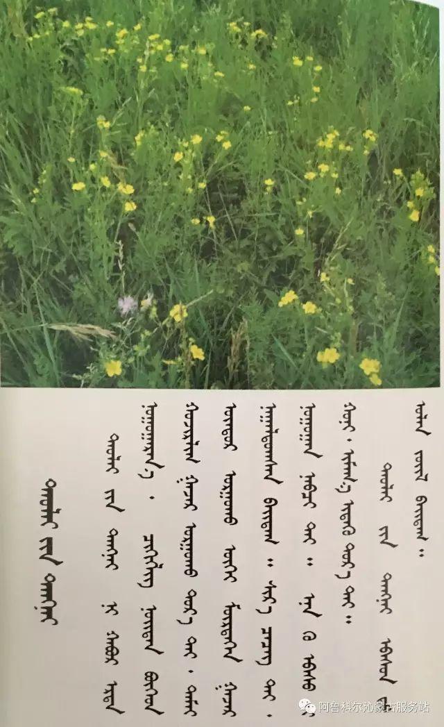 100 多种草的蒙古文介绍 第38张 100 多种草的蒙古文介绍 蒙古文库