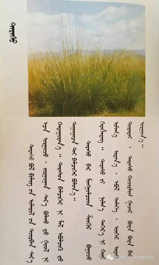 100 多种草的蒙古文介绍 第46张 100 多种草的蒙古文介绍 蒙古文库