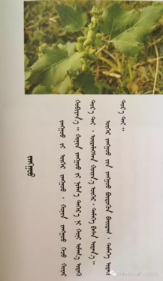 100 多种草的蒙古文介绍 第49张 100 多种草的蒙古文介绍 蒙古文库
