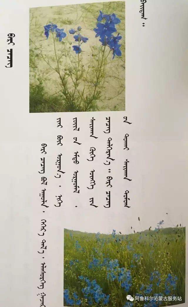 100 多种草的蒙古文介绍 第54张 100 多种草的蒙古文介绍 蒙古文库