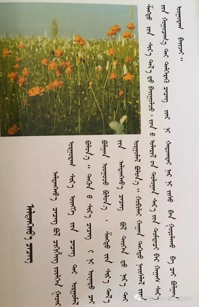 100 多种草的蒙古文介绍 第53张 100 多种草的蒙古文介绍 蒙古文库