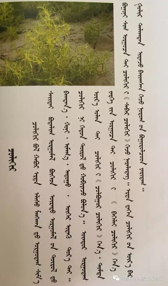 100 多种草的蒙古文介绍 第55张 100 多种草的蒙古文介绍 蒙古文库