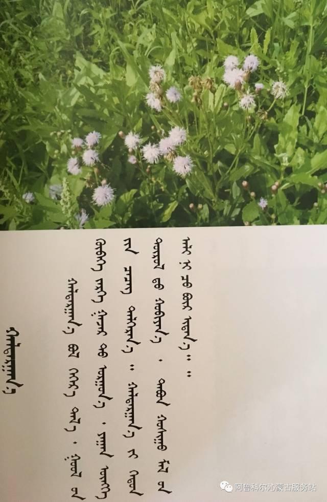100 多种草的蒙古文介绍 第59张 100 多种草的蒙古文介绍 蒙古文库