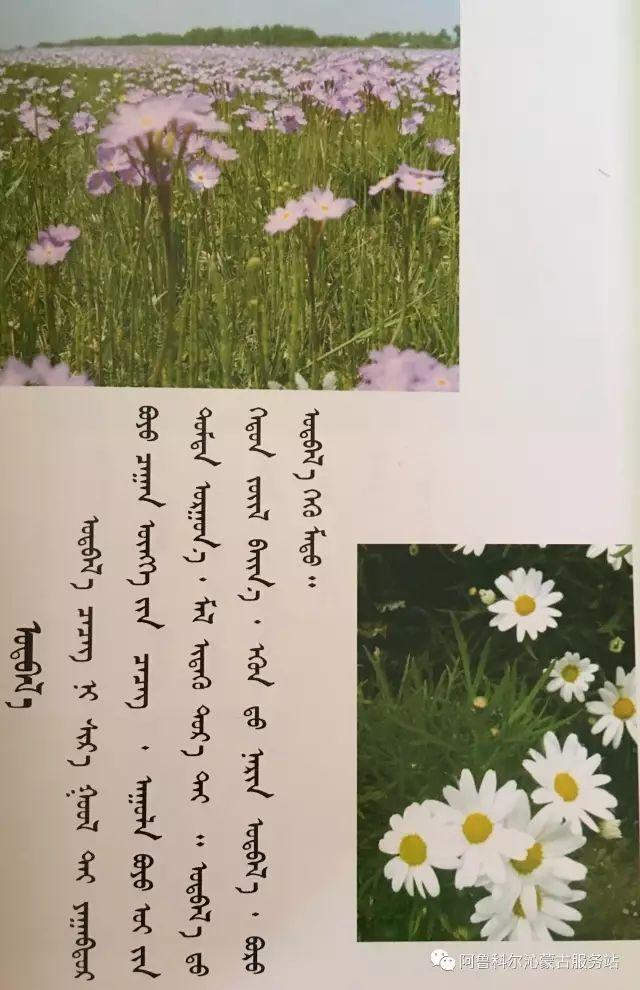 100 多种草的蒙古文介绍 第61张 100 多种草的蒙古文介绍 蒙古文库